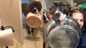 Pit bull carrega tigela por toda casa pedindo comida para sua dona. (Foto: Facebook/Mya the Hungry Wiggle Butt)