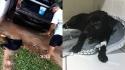 Homem é preso em Maceió por maltratar cão. Animal se recupera após o ataque. (Foto: Reprodução/G1 | Instagram/rosanajamboadv)