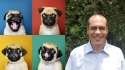 As escalas são baseadas nas expressões comportamentais de animais, incluindo pets. (FOTO: pugs/rawpixel.com | Prof. Stelio, da Unesp/Arquivo Pessoal)