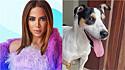 Anitta tenta ajudar cão perdido em condomínio a encontrar seu dono. (Foto: Instagram/Anitta)