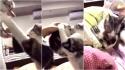 Mulher pega filhote e gata reage querendo-o de volta. (Foto: Reprodução Reddit/Circus-Bartender)