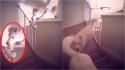 Cachorra surpreende por sua esperteza em abrir grade de proteção que leva para o segundo andar da casa. (Foto: Reprodução/Kennedy News & Media)