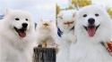 Cão samoieda e gato persa divertem seguidores com suas caretas. (Foto: Instagram/casperandromeo)