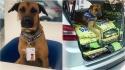 O cão Tucson Prime é convidado a ser Embaixador da adoção animal pela Alinutri Nutrição Animal. (Foto: Instagram/tucson_prime)