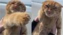 Gatinho vai a praia e faz caretas ao receber vento no rosto. (Foto: Instagram/iispumpkincat)