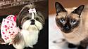Sequestro de pets aumenta na pandemia. (Foto: Reprodução Pinterest / National Today)