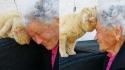 Mulher reencontra seu gato perdido há 4 anos na Itália. (Foto: Mimma Bei/Facebook)