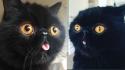 O Gremlin e seus olhos alaranjados. (Foto: Instagram / goodboigremlin)