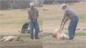 Golden retriever tem reação hilária quando dono tenta levá-lo embora do parque. (Foto: Reprodução Youtube/Wipandco)