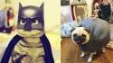Fantasias engraçadas para pets. (Foto: Divulgação | Reprodução/mckenken.tumblr.com)