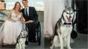 Cachorro desaparece minutos antes do casamento de seus tutores. (Foto: Twitter/@IStepFunny)