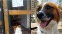 Cachorro abandonado em frente a prédio com placa escrito não deixem o cão entrar, ganha novo lar. (Foto: Arquivo Pessoal/Lujan Videla)