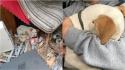 Cachorro salvo de rinha clandestina abraça voluntário que o salvou. (Foto: Facebook/Stray Rescue of St. Louis)