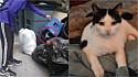 Casal resgata gato minutos antes dele ser jogado em compactador de lixo. (Foto: Reprodução Instagram/littlewanderersnyc)