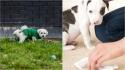 Infecção urinária entre os cães/; saiba o que fazer antes e depois do diagnóstico. (Foto: Divulgação/Pixabay)