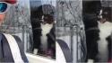 Gato tem reação hilária ao tentar expulsar carteira da sua casa. (Foto: Reprodução Youtube / Debra Anderson)