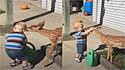 Garotinho é filmado trocando carinho com cervo em momento muito fofo. (Foto: Reprodução Youtube/Waggle TV)