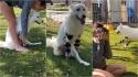 Mulher se emociona ao ver o seu cachorro andar pela primeira vez usando próteses. (Foto: Reprodução Facebook/Safe in Austin)