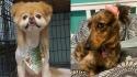 Penteados criativos em pets. (Fotos: Instagram/cassiissassy1389 | Instagram/pippi.the.minidoxie)