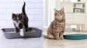 Confira algumas dicas para ensinar o seu gato a usar devidamente a caixa de areia. (Foto: Divulgação/Pinterest)