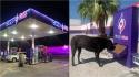 Posto de gasolina no México instala comedouros para cães de rua poderem se alimentar. (Foto: Facebook/Grupo CargoGas)