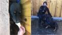 Socorristas oferecem sorvete para acalmar cão preso e retirá-lo de fresta, onde ficou preso por horas. (Foto: Facebook/Denver Animal Shelter)