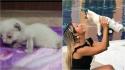 Mulher adota gatinho abandonado que seria sacrificado por ter deficiência. (Foto: Reprodução Youtube/Noticias Caracol)