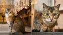 Igreja faz homenagem à gatinha que morreu após 12 anos vivendo em sua catedral. (Foto: Bridget Davey)