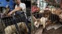 Cada vez mais chineses apoiam a criação de uma lei contra a crueldade aos animais de estimação. (Foto: AP Photo/ Andy Wong | Adam Parascandola/HSI)