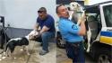 Cão em situação de rua invade delegacia e acaba sendo adotado por policiais. (Foto: Policía de Puerto Rico)