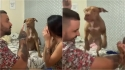 Donos simulam briga para ver reação de cachorro e ele defende a sua dona. (Foto: Arquivo Pessoal/Andreza Albuquerque)