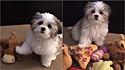 Tutora faz brincadeira com cachorro: Qual é o seu melhor amigo? (Foto: Instagram/heyyybenji)