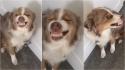 Cadela abre sorriso debochado após fazer cocô no tapete da dona. (Foto: Reprodução Facebook / Kellie Rossi Larsen)