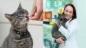 Médica Veterinária explica sobre nutrição felina. (Fotos: esquerda - Sandy Millar/Unplash | direita - arquivo pessoal/Vanessa Zimbres)