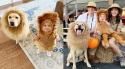 O cão labrador chamado Huckleberry e sua família. Fotos: Instagram @bymegkorzon