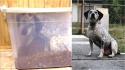 Dona percebe o sumiço de cadela e a encontra trancada quietinha na caixa de ração. (Foto: Arquivo Pessoal/Brandy Stenzel)