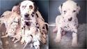 Dona leva sua cadela ao veterinário, ouve que ela terá 3 filhotes, mas cadela dá à luz 18 filhotes. (Foto: Cecilia Langton-Bunkergot)