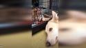 Gato conforta cachorro que esperava por ser atendido por veterinário. (Foto: Reprodução Youtube/TocoTV)