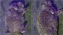 Dona de gata obesa apela para que os vizinhos parem de dar guloseimas à felina. (Foto: Reprodução/APEX)
