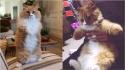 Gatinho que perdeu as patas congeladas inspira pessoas a superar adversidades. (Foto: Instagarm/rex2paws)