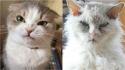 O humor desses gatos irão contagiar o seu dia. (Foto: Facebook/Jlene Barnes | Facebook/Sashiee Chuu)