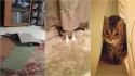 Gatinhos tentam se esconder de seus donos nos lugares mais prováveis. (Foto: Imgur/lect1 | Imgur/Whogivesafuckaboutmyname | Imgur/CherylChan)