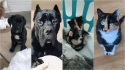 Donos comparam fotos do antes e depois dos seus animais e a transformação é adorável. (Foto: Facebook/ Taylor Anderson | Facebook/Iris Faith Sullivan)