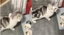 Gato dá a maior birra toda madrugada para dona encher sua tigela de comida. (Foto: TikTok/Douyin maoyelibai)