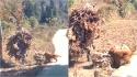Cão é filmado carregando fardo de folhas secas para ajudar o dono em área rural na China. (Foto: Reprodução/weibo.com)