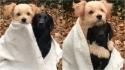 No inverno da Alemanha, durante sessão de fotos, um cachorrinho abraça o outro envolto de uma coberta. (Foto: Reprodução Instagram/knutini_)