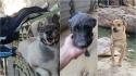 Abrigo abre vagas para acariciadores de cães: Precisam de amor e carinho. (Foto: Facebook/Refugio Gamaliel)