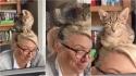 Gatinho escolhe cabeça da dona como lugar ideal para tirar uma soneca. (Foto: Reprodução/Caters)