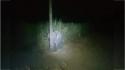 Elefante é flagrado comendo cana-de-açúcar em propriedade e tenta se esconder atrás de poste. (Foto: Reprodução/Daily Mail)