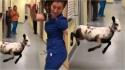 Cordeira pula e dança com técnica em veterinária pelos corredores do abrigo. (Foto: Facebook/Longview Animal Care and Adoption Center)